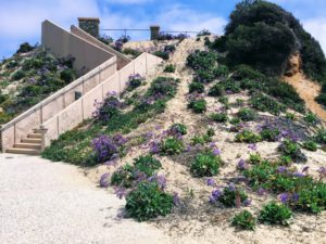 south ponto beach stairway hidden gems in San Diego