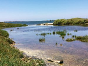 Sweetwater Marsh National Wildlife Refuge 1 shallow water pool