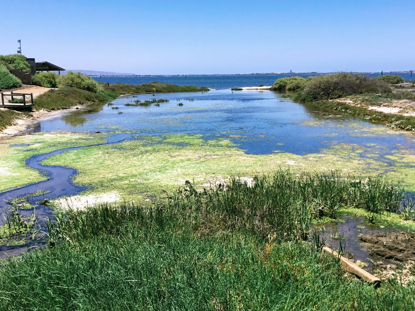 Sweetwater Marsh National Refuge San Diego Bay