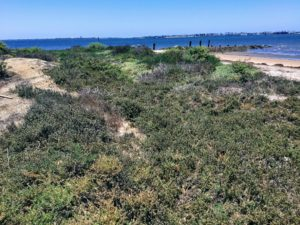 Sweetwater Marsh National Wildlife refuge native flora San Diego Bay