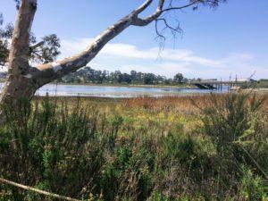 Batiquitos lagoon san diego birding
