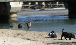 Del Mar Dog Beach river san diego birding