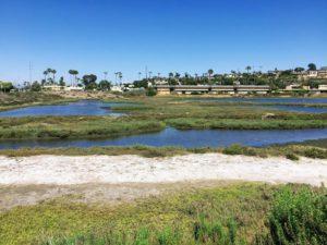 Famosa NE View San Diego Birding