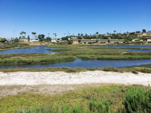 Famosa NE View ocean beach slough