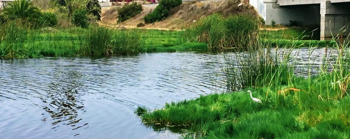 Loma Alta Creek San Diego Birding
