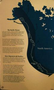 Pacific Flyway poster san diego birding