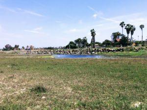 San Diego River Estuary San Diego Birding