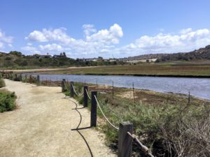San Elijo Lagoon Trail San Diego Birding