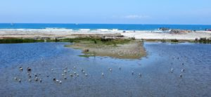 San Luis rey river terminus san diego birding