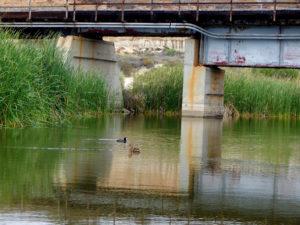 San Mateo Creek san diego birding