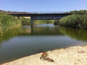 San Mateo River san diego birding