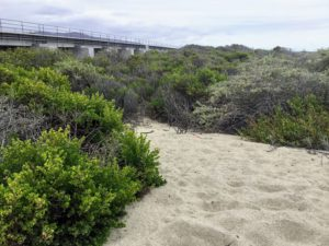 Trestles Native vegetation san onofre state Beach