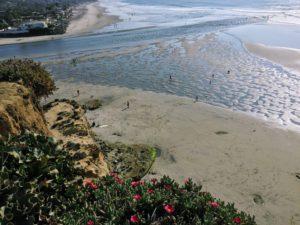 Del Mar Dog Beach Bluff