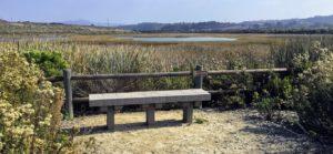 Peter Douglas Wetlands