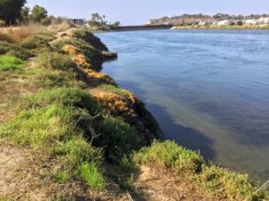 Riverpath Trail West View San Dieguito River Trail