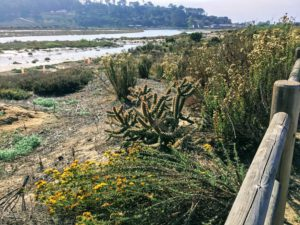 San Diego Native Plants San Dieguito River Trail