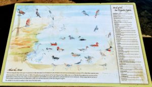 San Dieguito lagoon birds info sign