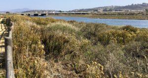 San Dieguito River Trail 1East View