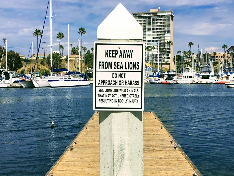 sea lions oceanside harbor launching ramps