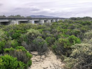 Trestle Beach San Dunes Best San Diego Beaches