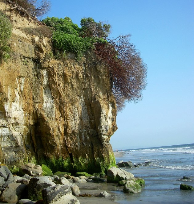 Encinitas Bluff Tree Best San Diego Hikes