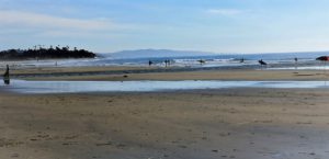 North Cardiff State beach best san diego hikes