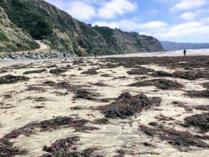 South Blacks Beach Best San Diego Hikes
