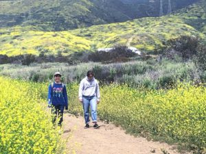 Camp Pendleton Hills black mustard plants CA super bloom