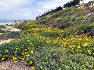 North View Trestles Beach California super bloom