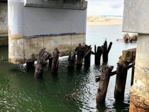 San Mateo Creek Trestles dead