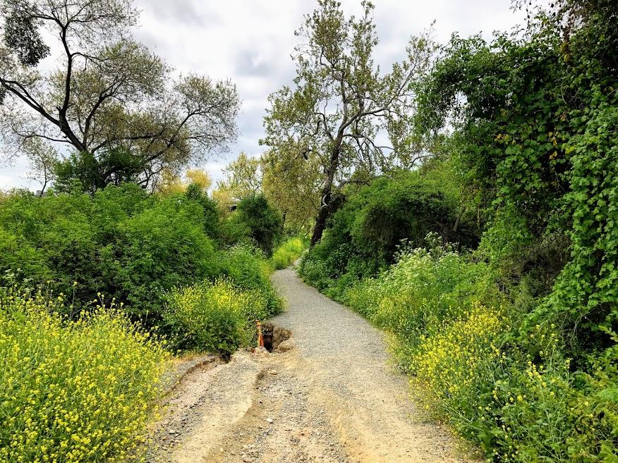 beach trail trailhead dirt path trees