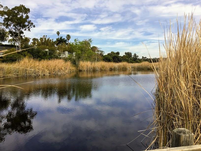 buena vista lagoon san diego beaches