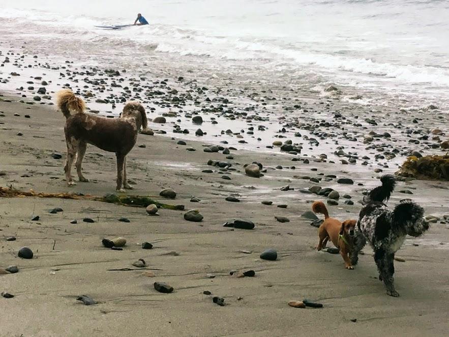 dogpatch beach san diego dog friendly beaches