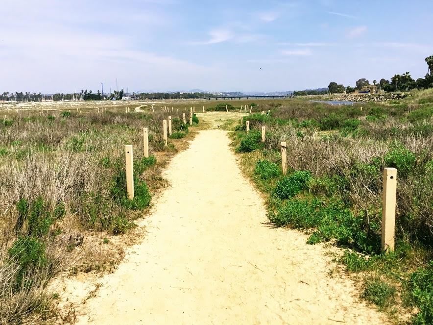 ocean beach dog beach path