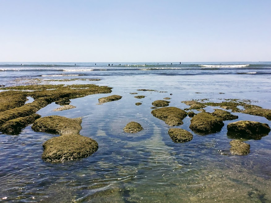 terramar beach tide pool san diego beaches