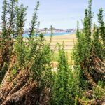 Agua hedionda lagoon view nature center