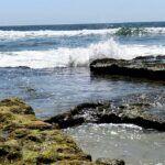 Boneyards reef sept encinitas CA