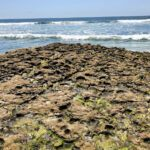 Encinitas Reef Boneyards CA