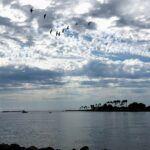Mission Bay Sept 2019 rain clouds pelicans