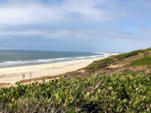 rhus integrifolia lemonade berry bush beach