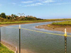 San Elijo gemma trail san elijo lagoon