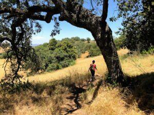 Santa Rosa Plateau bending tree prairie
