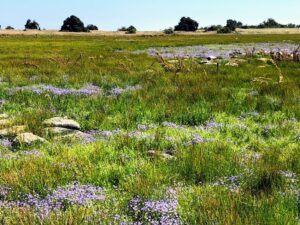 Vernal Pool Santa Rosa Plateau Riverside California