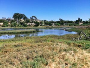 Famosa Slough San Diego Birding