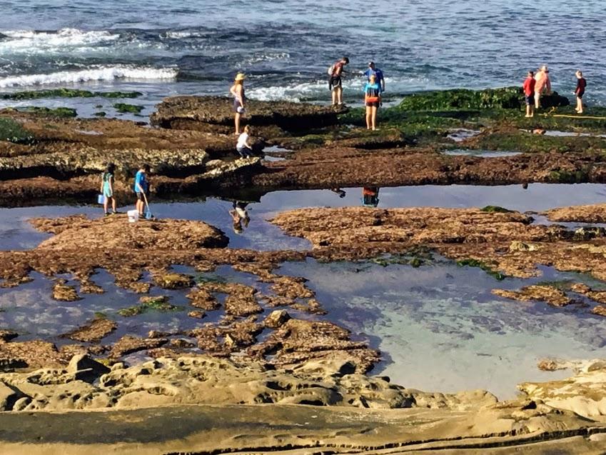 Hospital Beach Tide Pools San Diego Beach