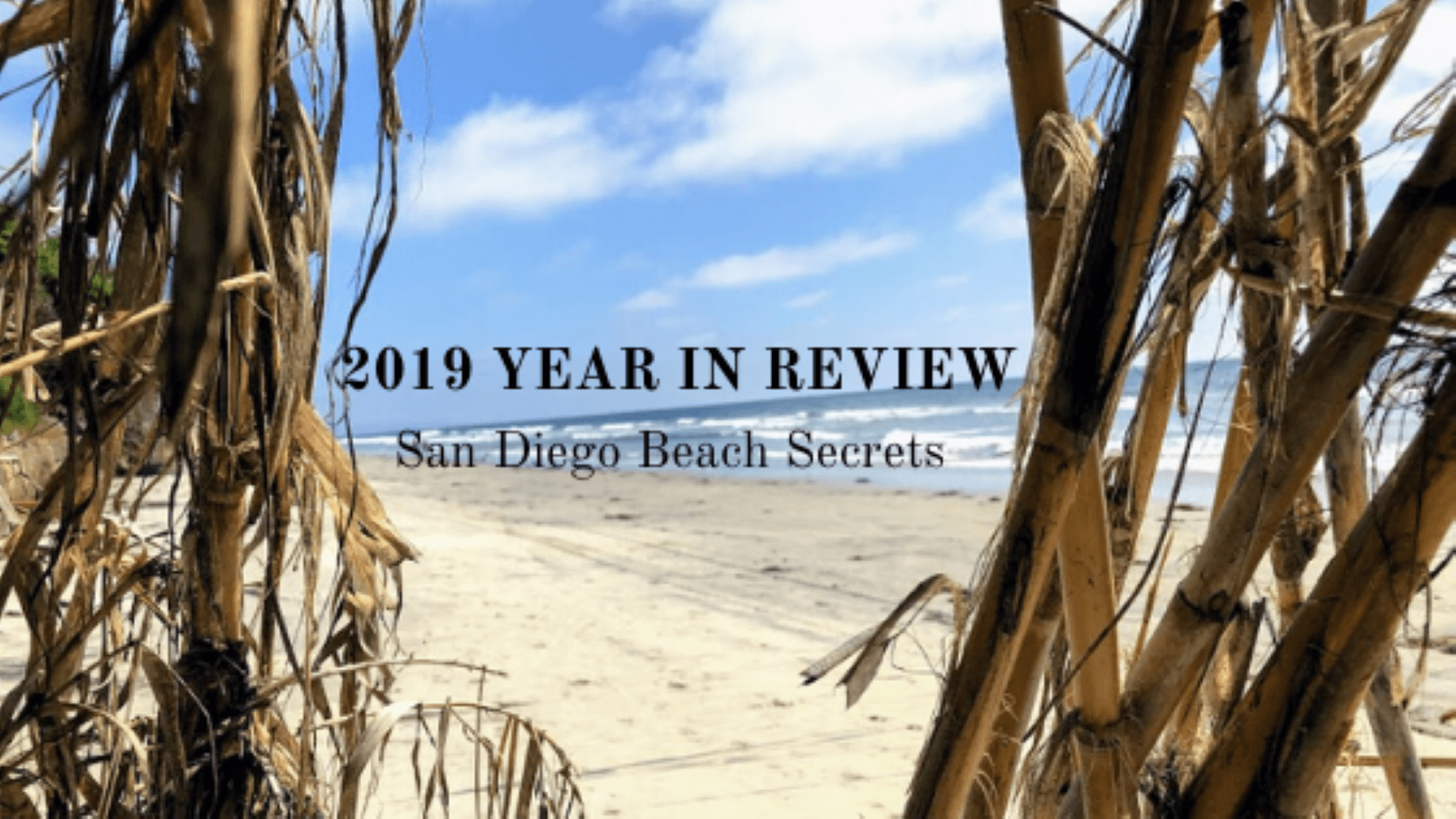 2019 Year in Review Large featured image