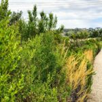 Agua Hedionda Discovery Center trail 2019 year in review