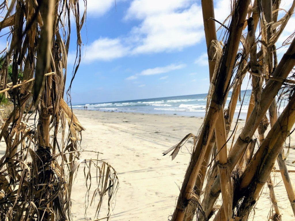 beacons beach bamboo 2019 year in review