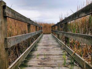 buena vista lagoon bridge 2019 year in review