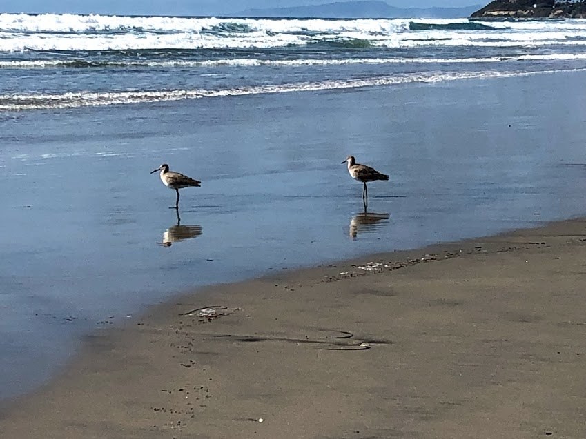Cardiff State beach 2019 year in review